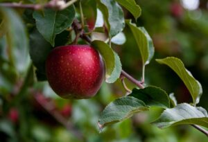 APPLE - healthy food for weight loss