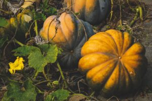 PUMPKIN - healthy food for weight loss
